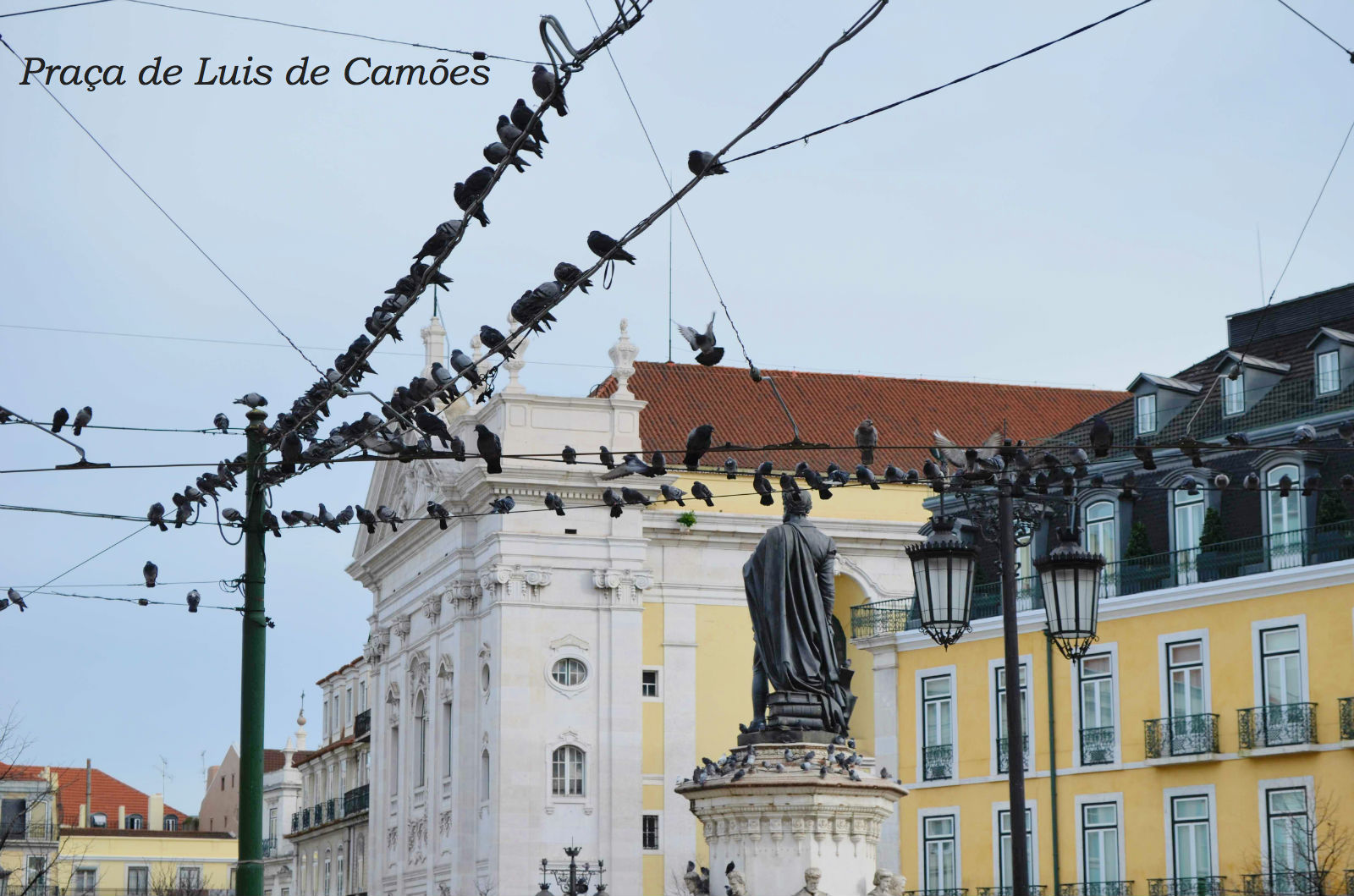Lisbon praca luis camoes pigeons